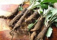 Экстракт корня лопуха предотвращает развитие злокачественных опухолей
