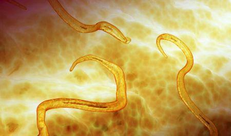 как употреблять чеснок от паразитов