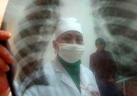 Прополис поможет в борьбе туберкулезом