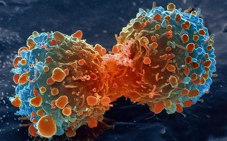 Деление раковой клетки