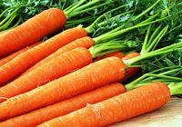 Морковь против рака предстательной железы