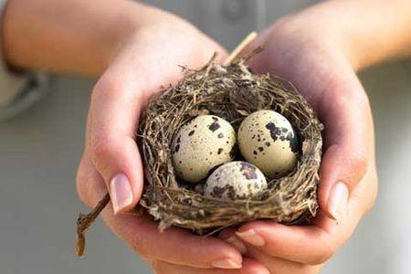 Картинки по запросу Инъекции перепелиными яйцами
